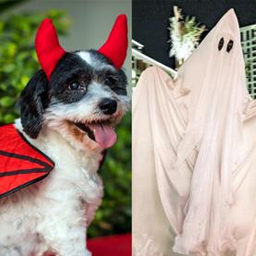 Halloween 2020: 25 spooktacular things to do in Dubai, Abu Dhabi, Sharjah and Ras Al Khaimah