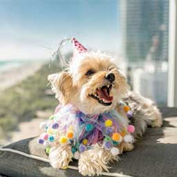 All the places you can take your dog in the UAE