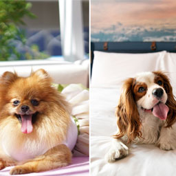 Protect your pooch's paws with these pet-friendly indoor spots in Dubai